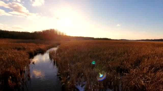 Golden field glowing in the sunlight