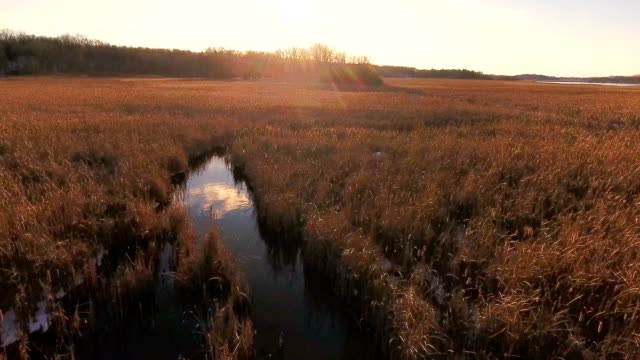 golden field glowing in the sunlight - michigan stock videos & royalty-free footage