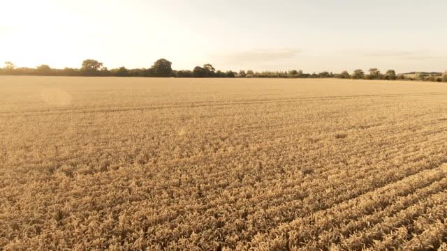 ゴールデン フィールド a パート 1/2 - 農園点の映像素材/bロール