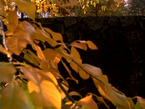 Golden foliage and stone wall