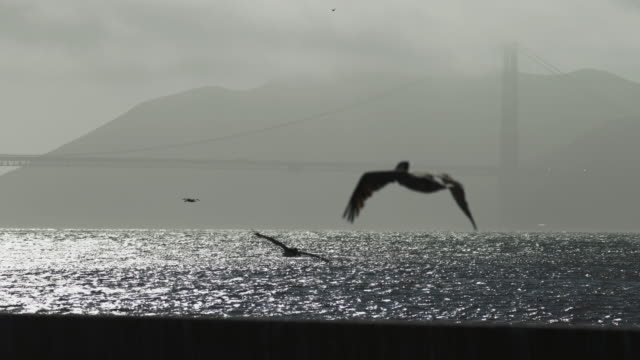 golden gate bridge mist - pelican stock videos & royalty-free footage