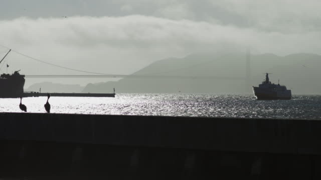 golden gate bridge mist - ferry stock videos & royalty-free footage
