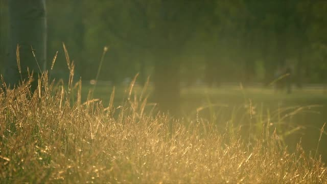 golden grass by the pond - resting stock videos and b-roll footage