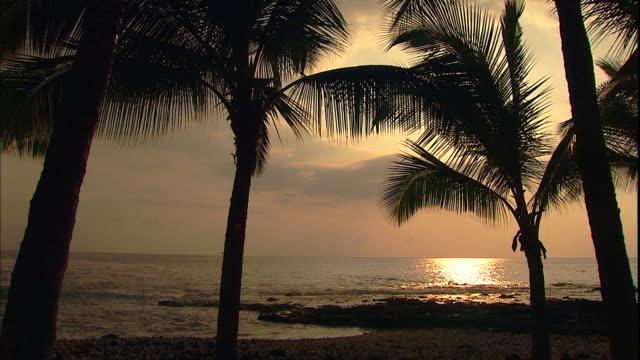 A golden hour sky highlights palm tress on a Hawaiian beach.