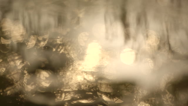 vidéos et rushes de golden light reflects off the surface of a lake. - gold colored