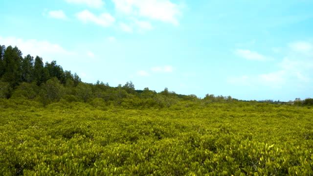 vídeos y material grabado en eventos de stock de golden manglar campo - tanga