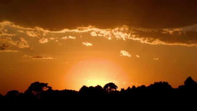 Golden Orange Sky Silhouette Maasai Mara  Kenya  Africa
