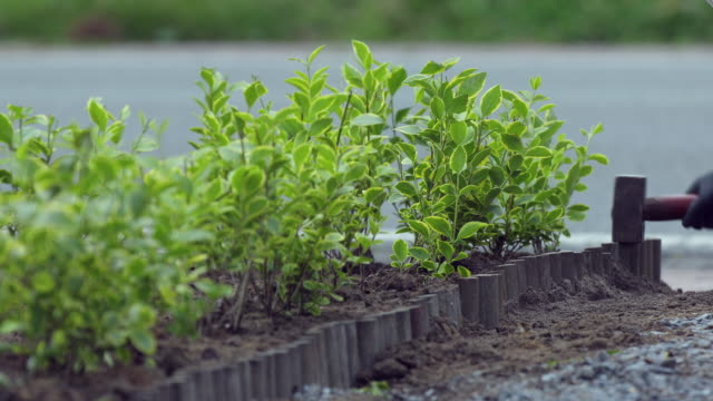 golden privet and roll border - yard measurement stock videos and b-roll footage