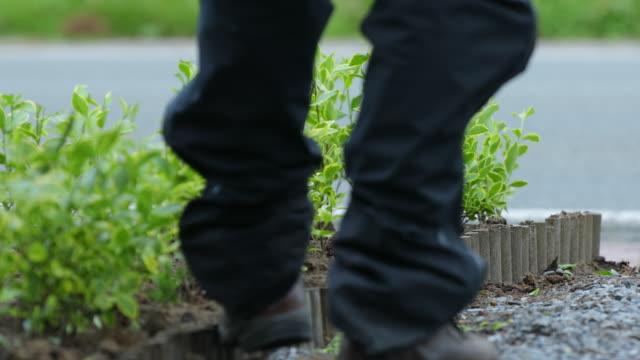 golden privet pruning - gardening glove stock videos & royalty-free footage