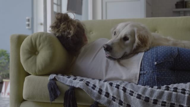 golden retriever and girl relaxing on sofa - behaglich stock-videos und b-roll-filmmaterial
