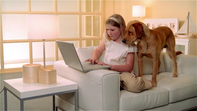 ms, golden retriever assisting girl (8-9) working on laptop in living room - overweight dog stock videos & royalty-free footage