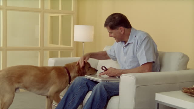 ms, golden retriever bringing leash to man sitting on sofa - korta ärmar bildbanksvideor och videomaterial från bakom kulisserna