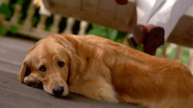 CANTED MS golden retriever lying on porch with woman + girl on porch swing in background