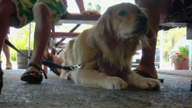 MS, Golden retriever lying under picnic table, man with son (8-9) sitting on bench, low section, Wellfleet, Cape cod, Massachusetts, USA