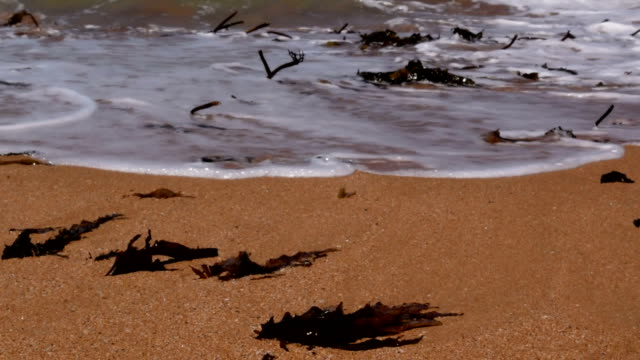 Goldene Algen sich am Strand Waschung
