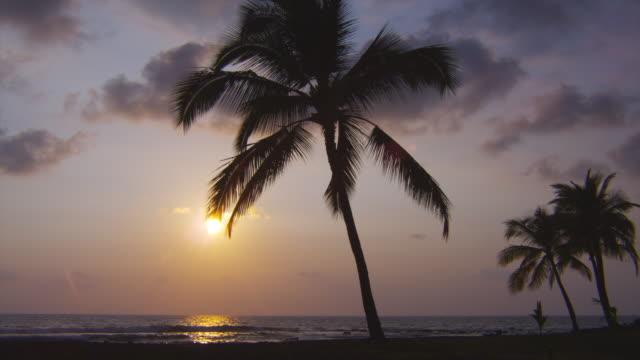 A golden sun silhouettes palm trees on a quiet Hawaiian beach.