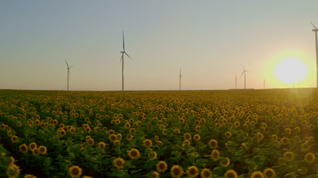 golden sunflowers with wind turbine farm at sunset - generator stock videos & royalty-free footage