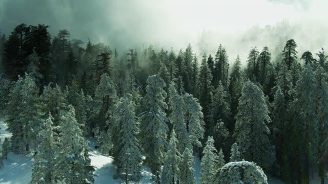 霧と雪の木の黄金の日光 - 空中 - エンジェルス国有林点の映像素材/bロール