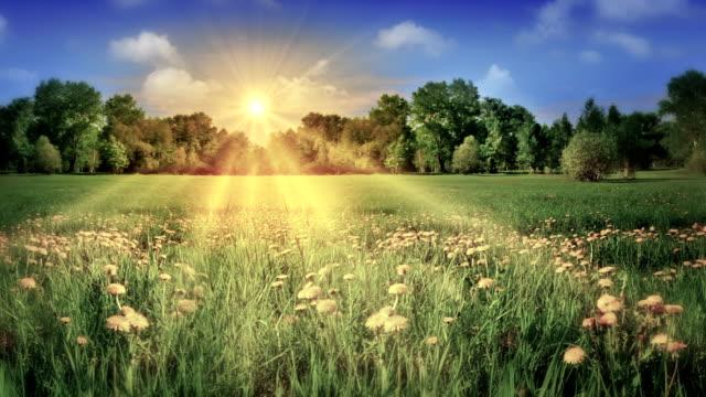 Gouden zonlicht gieten over groene weide