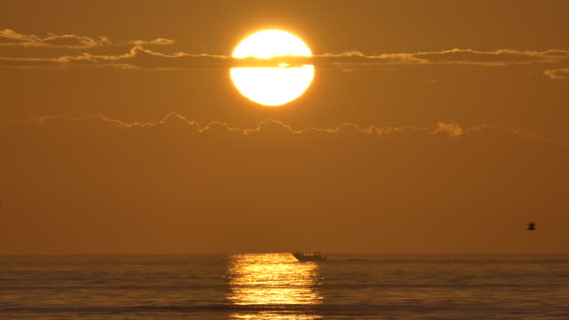golden sunrise over the ocean off the west coast of south africa - seagull stock videos & royalty-free footage