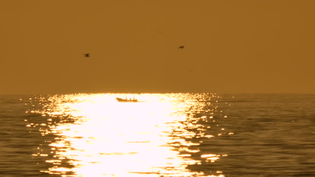 vidéos et rushes de golden sunrise over the ocean off the west coast of south africa - mouette
