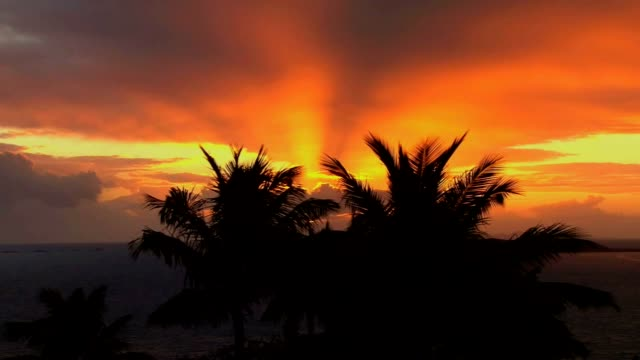 golden sunset 07 - palm tree stock videos & royalty-free footage