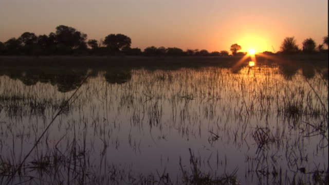 A golden sunset falls over a fly-infested marsh. Available in HD.