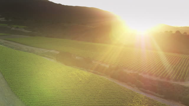 Golden Sunset in Santa Lucia Highlands, Northern California - Aerial Shot
