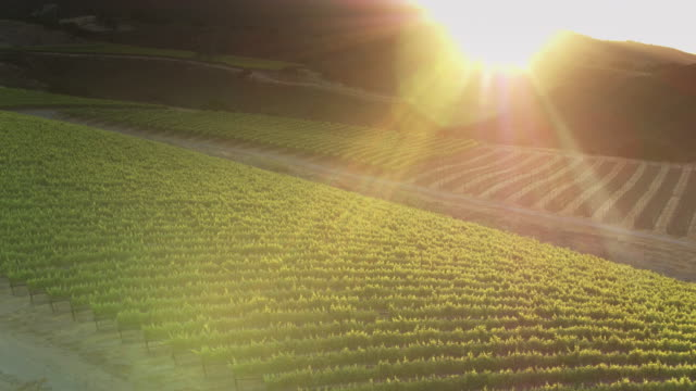golden sunset in santa lucia highlands, northern california - drone shot - monterey county stock videos and b-roll footage
