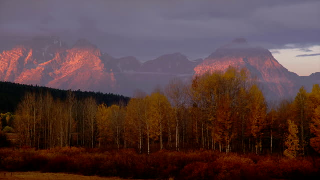 golden trees grow at the foot of the mountains at oxbow bend in grand teton national park. - grand teton national park stock videos & royalty-free footage