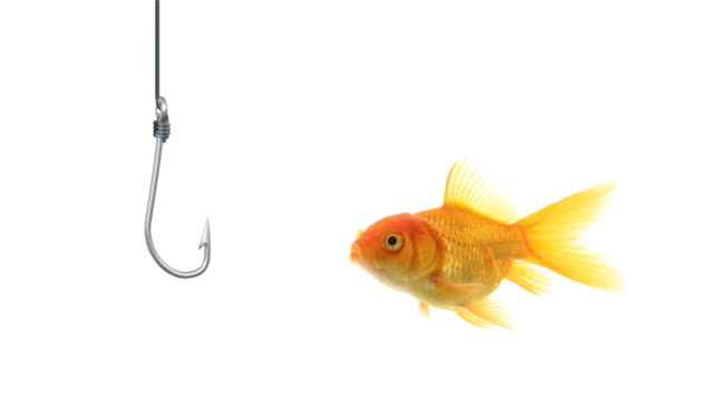 goldfish ignores a hook - hook stock videos and b-roll footage