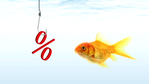 goldfish looking for sales - freshwater fish stock videos & royalty-free footage