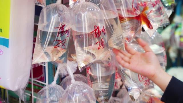 goldfish market in hong kong - fish market stock videos & royalty-free footage