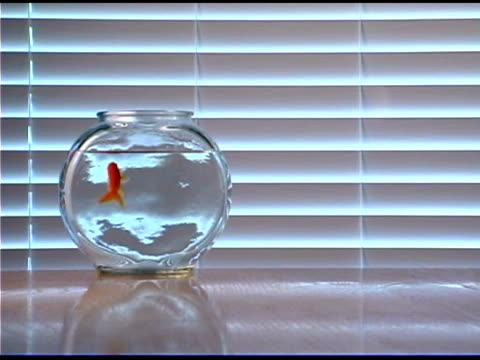 Goldfish swimming in fishbowl