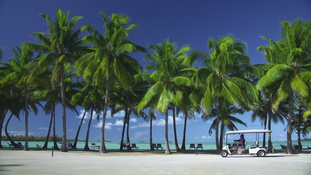 ws, golf card passing line of palm trees at tropical beach, aitutaki lagoon, aitutaki, cook islands - aitutaki lagoon stock videos & royalty-free footage