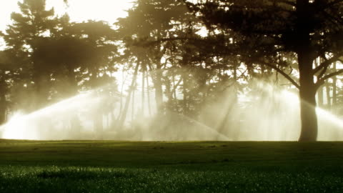 golf course sprinklers at sunrise - green golf course stock videos & royalty-free footage