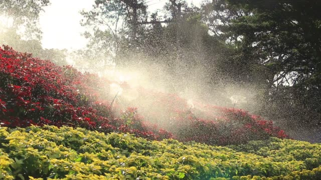 campo da golf sprinkler antincendio all'alba - attrezzatura per l'irrigazione video stock e b–roll