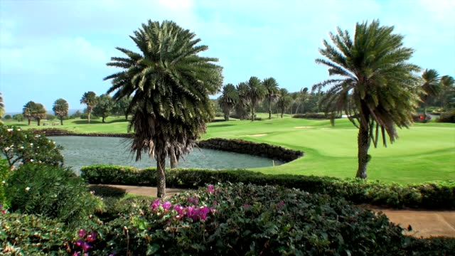 golf course - green golf course stock videos and b-roll footage