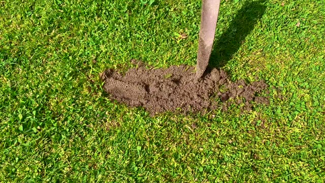 golfer repairing divot using a shovel with sand on golf course - golf shoe stock videos & royalty-free footage