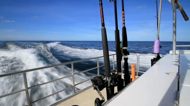 vídeos y material grabado en eventos de stock de de pesca - atún animal