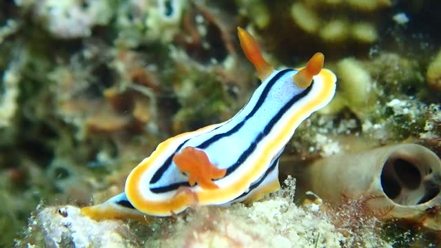 good close footage of nudibranch - nudibranch stock videos & royalty-free footage