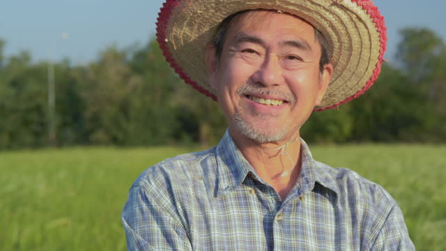 good looking ,skilled ,wise senior farmer looking to the camera with smile in green agricultural field with pride. - paddy field stock videos & royalty-free footage