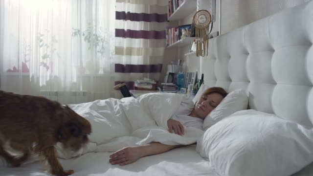 vídeos y material grabado en eventos de stock de good morning of mature woman with two dogs - two animals