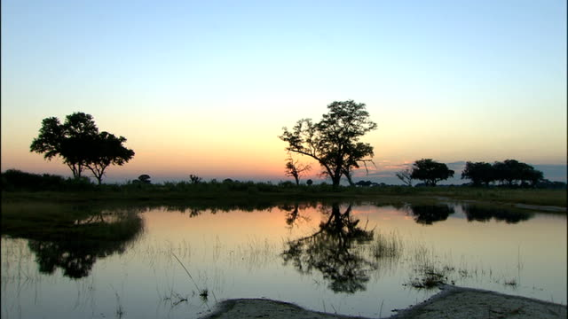 good views of african wildlife more shots of silhouettes of trees and bushes at sunrise bird landing in water kingfisher rising up from water and... - water bird stock videos & royalty-free footage