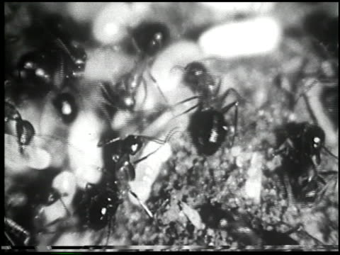 goodbye, mrs. ant - 6 of 13 - see other clips from this shoot 2170 stock videos & royalty-free footage