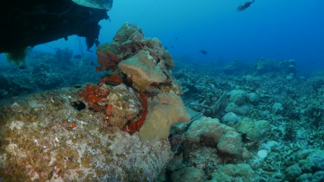 Goods of undersea Japanese navy seaplane wreck, Palau
