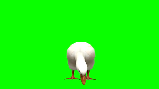 Goose Eating Green Screen (Loopable)