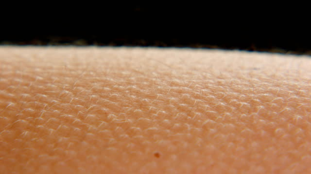 goosebumps on skin - human skin stock videos and b-roll footage