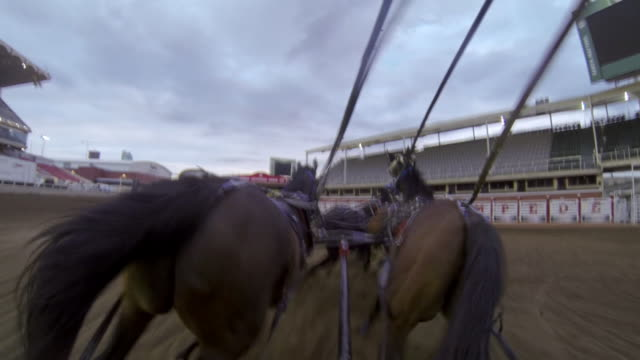 vídeos y material grabado en eventos de stock de a gopro on a chuckwagon showing four horses galloping - grupo pequeño de animales
