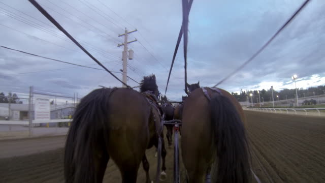 a gopro on a chuckwagon showing four horses galloping - cart stock videos & royalty-free footage